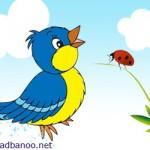 قصه پرنده و کفشدوزک
