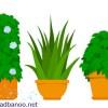خواب آرام زمستانی برای گیاهان