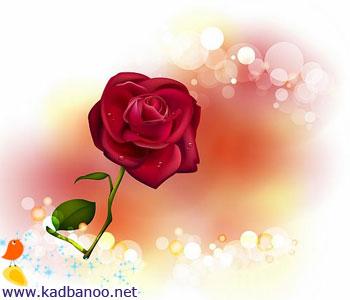 ماسک گل رز
